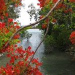 Fluss in Airlie Beach
