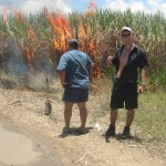 Brenndes Zuckerrohrfeld