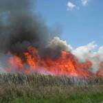 Feuer auf dem Feld