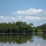 Daintree River Krokodil