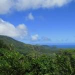 Regenwald-Blick