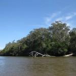 Der Noosa River