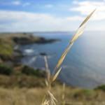 Küste von Phillip Island