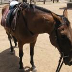 Pferd auf der Ranche