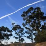 Eukalyptus am Wanderweg