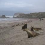 Seerobben am Strand